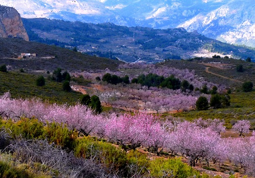 Looking at the mix of mountain and flowers of pink mix. We see nature and small roads. Where they lead can we dream of. How we got there can we also imagine as wee look at the poster. We will stand and be amazed and get a relaxing feeling of nature.